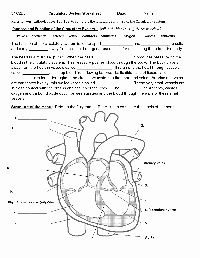 Circulatory System Worksheet Answers Inspirational 13 Best Of Rooms In the House Worksheet for Pre K