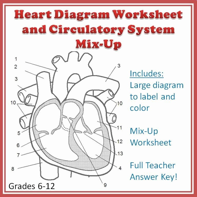 Circulatory System Worksheet Answers New A Clear Ready to Print Heart Diagram Worksheet that