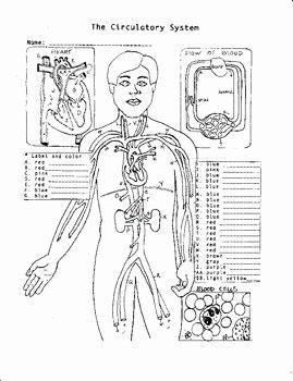 Circulatory System Worksheet Answers Unique Circulatory System by Biology Buff