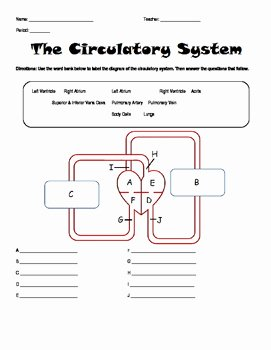 Circulatory System Worksheet Pdf Elegant Circulatory System Worksheet Homework by Amanda Behen