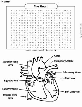 Circulatory System Worksheet Pdf Elegant Human Body Systems Word Search the Heart and Circulatory