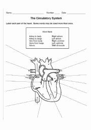 Circulatory System Worksheet Pdf Luxury Circulatory System Worksheets Kids the Best Worksheets