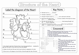 Circulatory System Worksheet Pdf Unique Gcse Biology Heart Structure Worksheet Pack by Beckystoke