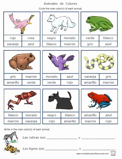 Colors In Spanish Worksheet Fresh Free 18 Page Worksheet Packet On Colors In Spanish