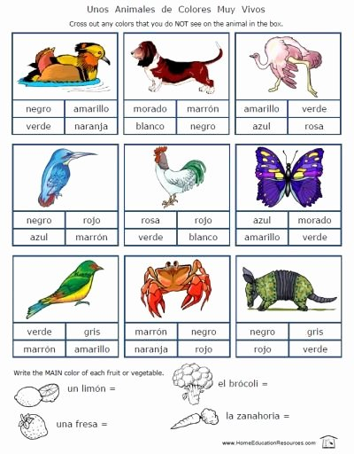 Colors In Spanish Worksheet New Spanish Colors Worksheets Packet 18 Pages Free to