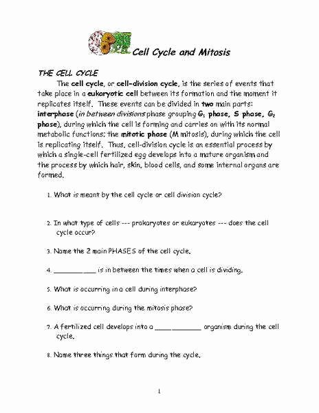 Cycles Worksheet Answer Key Awesome the Cell Cycle Worksheet Answer Key