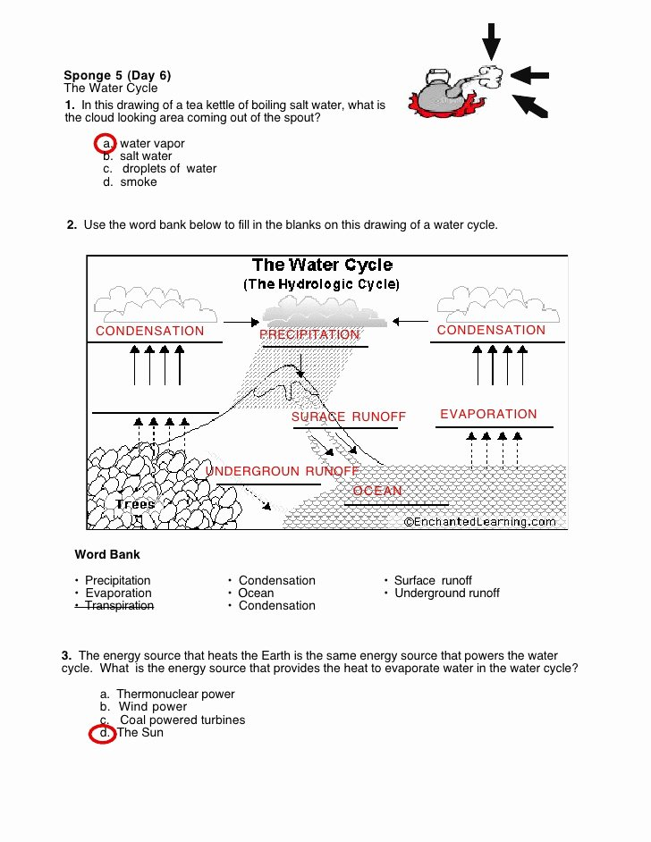Cycles Worksheet Answer Key New Water Cycle Worksheet S Swers