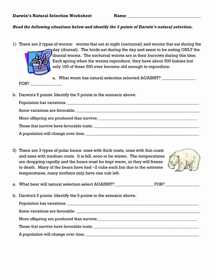 Darwin Natural Selection Worksheet Awesome Darwin S Natural Selection Worksheet School