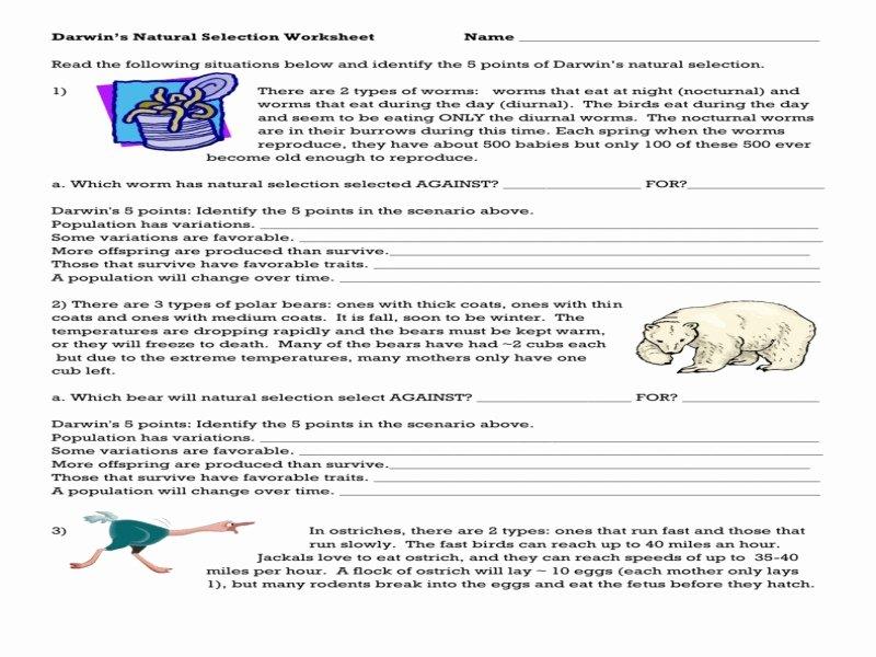 Darwin Natural Selection Worksheet Beautiful Darwins Natural Selection Worksheet Free Printable