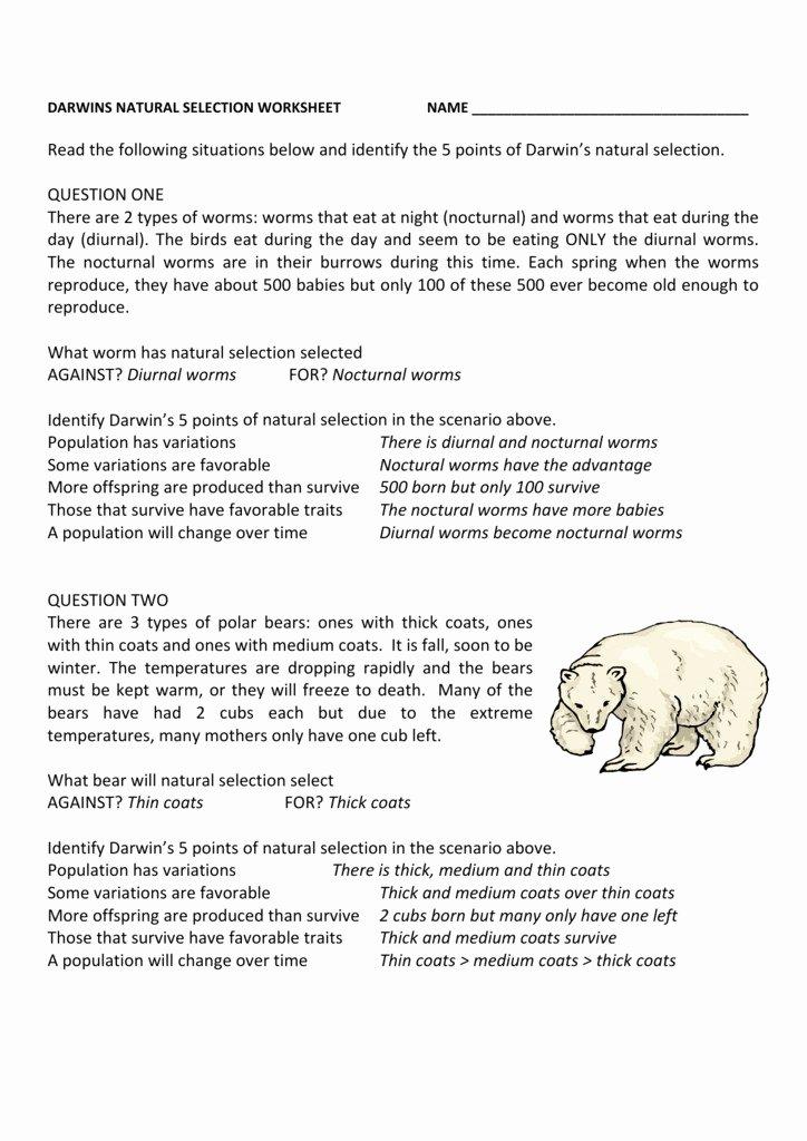 Darwin Natural Selection Worksheet New Darwin 39 S Natural Selection Worksheet High School