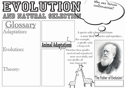 Darwin's Natural Selection Worksheet Answers Inspirational Evolution and Natural Selection Poster by Katie Lu