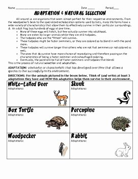 Darwin's Natural Selection Worksheet Answers Unique Adaptations and Natural Selection Hw Worksheet by