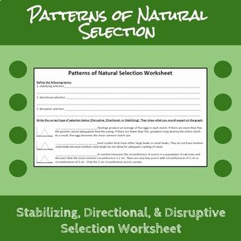 Darwin's Natural Selection Worksheet Inspirational Patterns Of Natural Selection Worksheet by Erin Frankson