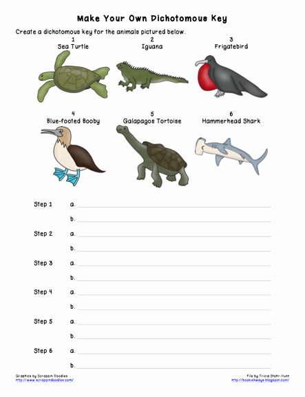 Dichotomous Key Worksheet Middle School Best Of Turtles Be the Animal with Rick Chrustowski Uwsslec