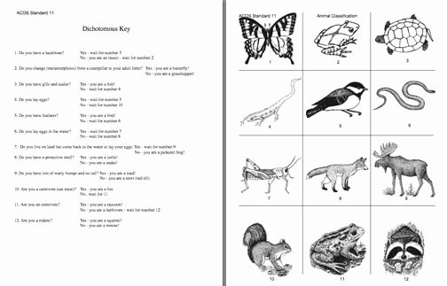 Dichotomous Key Worksheet Middle School Lovely Dichotomous Key Activity Google Search