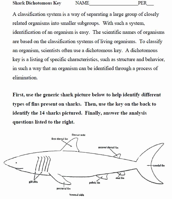 Dichotomous Key Worksheet Middle School Luxury 27 Awesome Dichotomous Key Worksheet Sharks Images