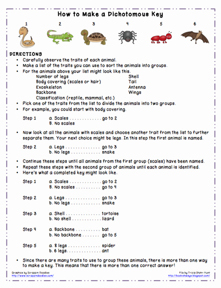 Dichotomous Key Worksheet Middle School Luxury Turtles Be the Animal with Rick Chrustowski Uwsslec