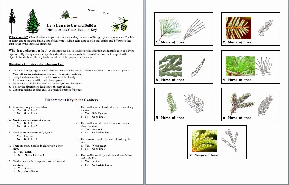 Dichotomous Key Worksheet Middle School New Amy Brown Science Teach Classification and Make It Fun
