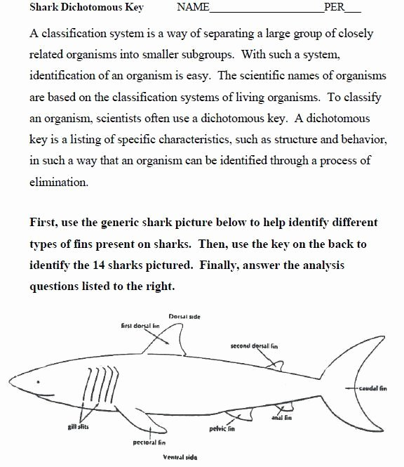 Dichotomous Key Worksheet Middle School Unique 27 Awesome Dichotomous Key Worksheet Sharks Images