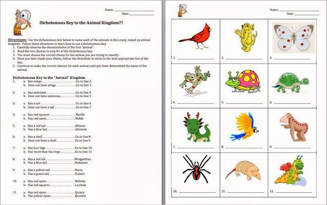 Dichotomous Key Worksheet Pdf Beautiful Plant Dichotomous Key Worksheet Worksheets for All – Free