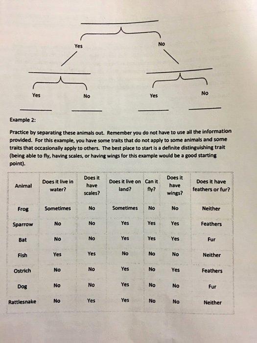 Dichotomous Key Worksheet Pdf Best Of solved Dichotomous Key Worksheet at Times It Can Be Diffi