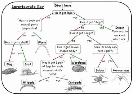 Dichotomous Key Worksheet Pdf Fresh Insect Dichotomous Key Worksheet the Best Worksheets Image