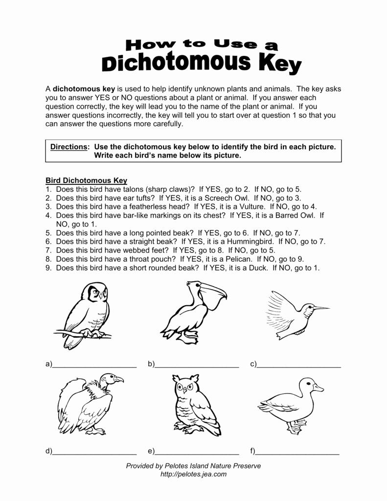 Dichotomous Key Worksheet Pdf Fresh Plant Dichotomous Key Worksheet