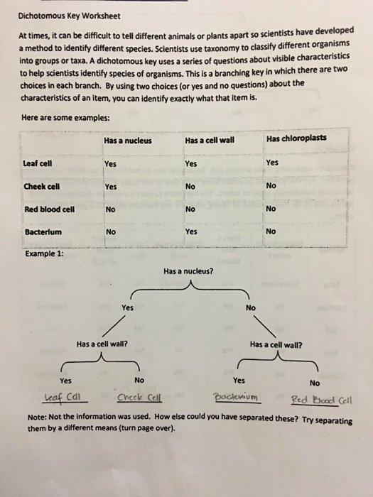 Dichotomous Key Worksheet Pdf Fresh solved Dichotomous Key Worksheet at Times It Can Be Diffi