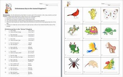 Dichotomous Key Worksheet Pdf Inspirational Animal Worksheet New 433 Animal Classification Worksheet