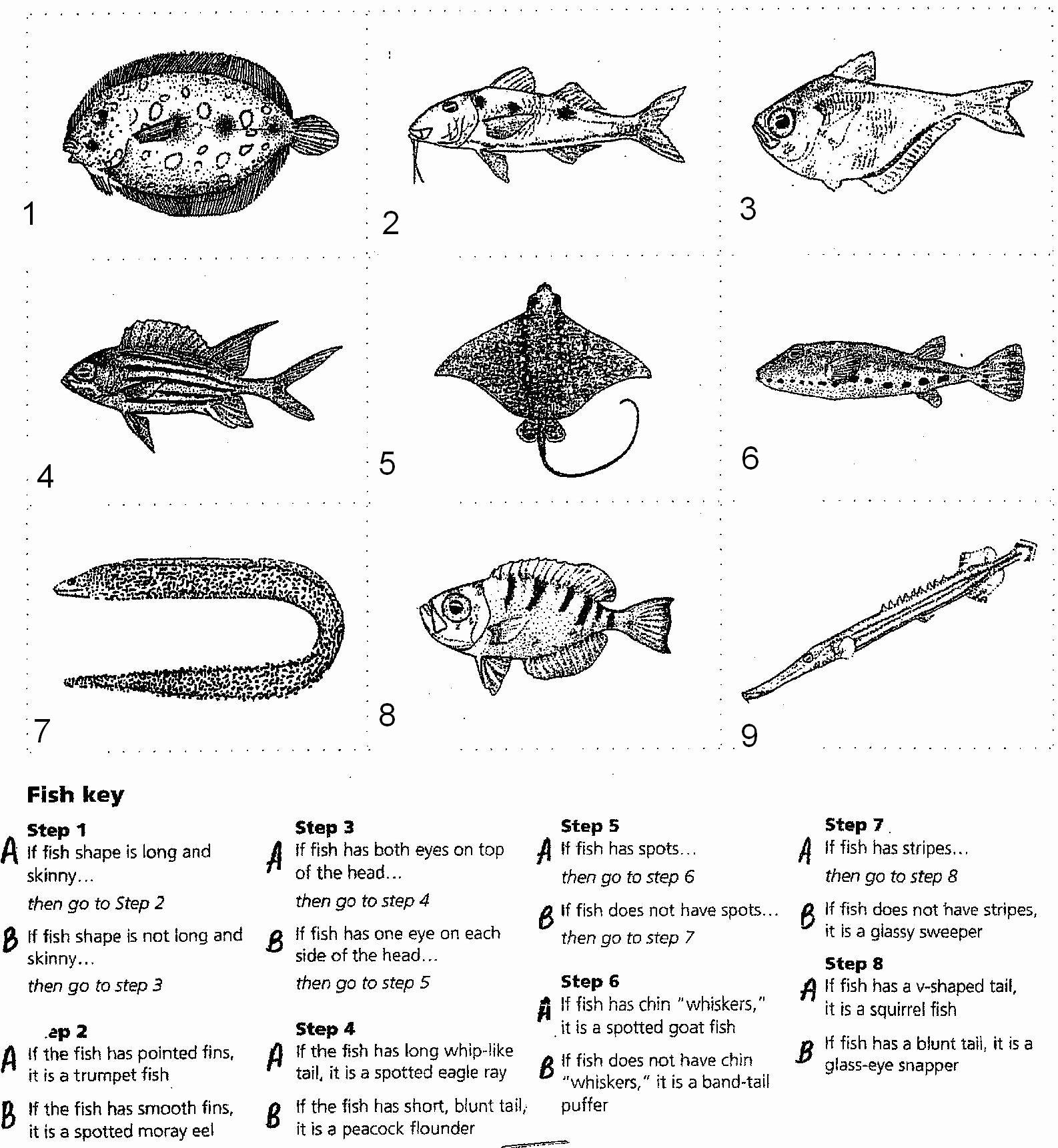 Dichotomous Key Worksheet Pdf Unique 10 Best Of Dichotomous Key Worksheets Answers