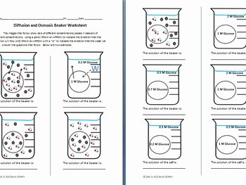 Diffusion and Osmosis Worksheet Answers Luxury Osmosis and Diffusion Worksheet by Sidol S Science Store