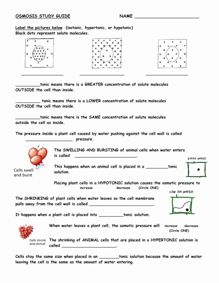 Diffusion and Osmosis Worksheet Awesome Diffusion and Osmosis Worksheet Answers