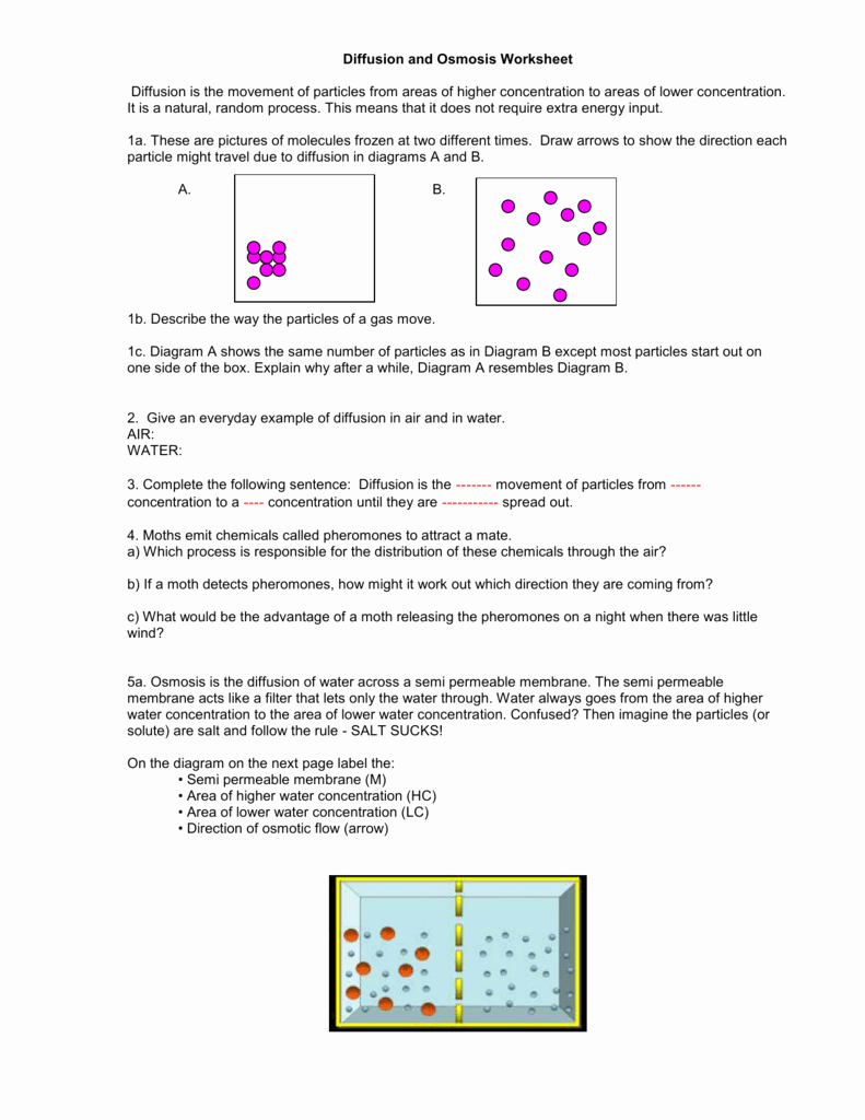 Diffusion and Osmosis Worksheet Beautiful Diffusion and Osmosis Worksheet