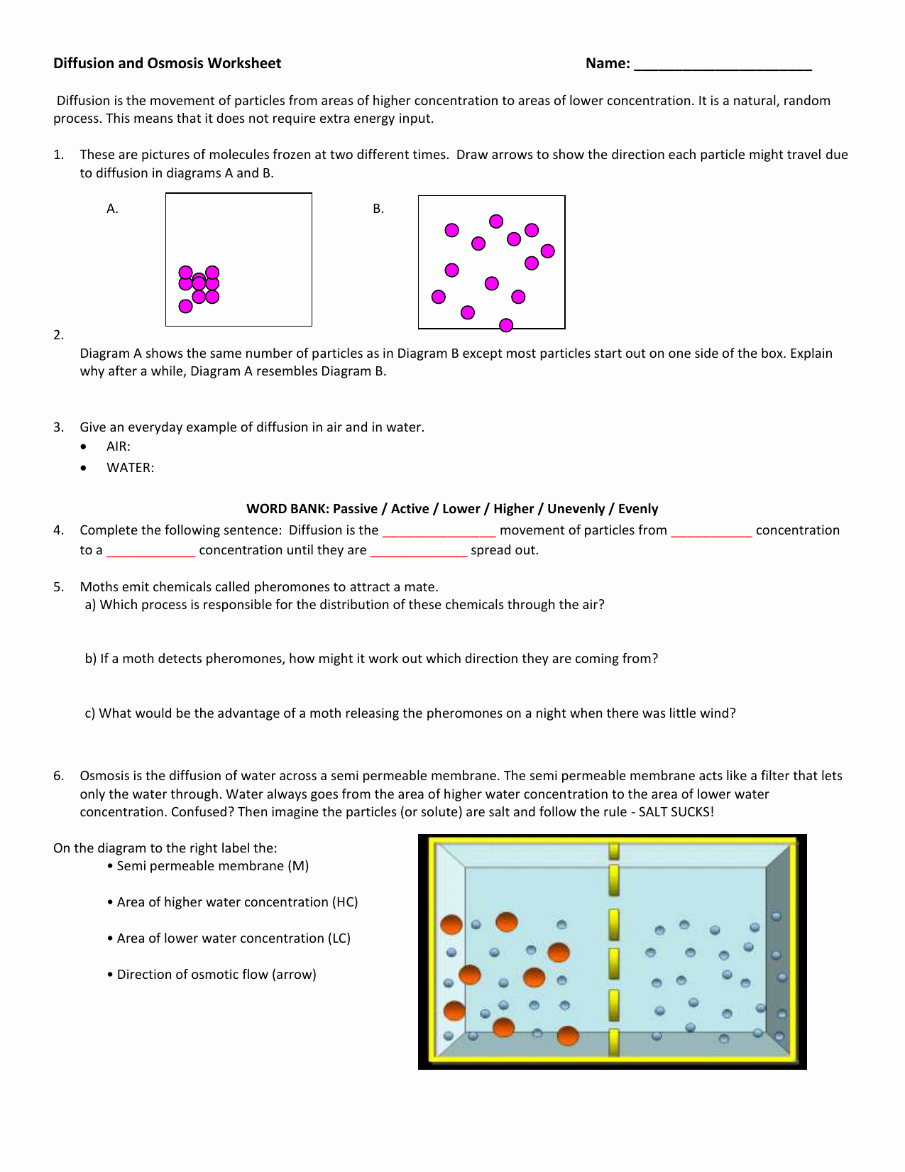 Diffusion and Osmosis Worksheet Elegant Diffusion and Osmosis Worksheet