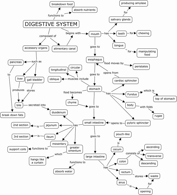 Digestive System Worksheet Answer Key Awesome 13 Best Of Biology Corner Worksheets Answer Key