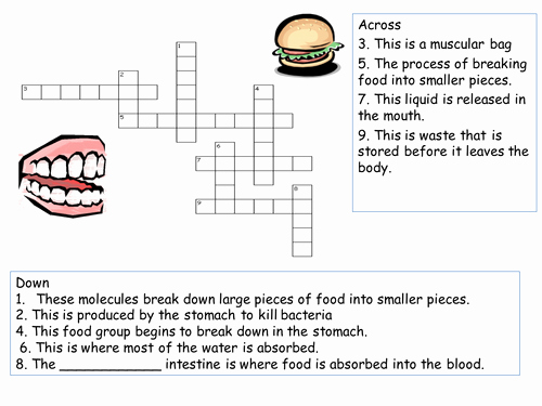 Digestive System Worksheet Answer Key Best Of the Digestive System Crossword by Ranjali Teaching