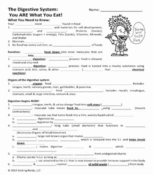 Digestive System Worksheet Answer Key Inspirational Digestive System Human Body Powerpoint and Handouts