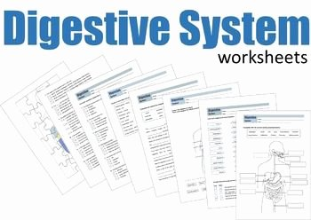 Digestive System Worksheet Answer Key Luxury 17 Best Images About [bgs] Teaching Life Sciences On