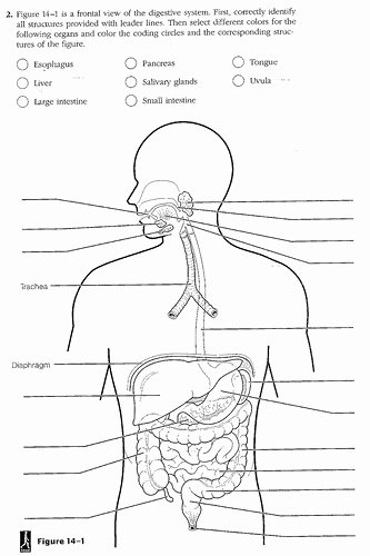 Digestive System Worksheet Answers Beautiful Flag Days Digestive System Diagram Worksheet