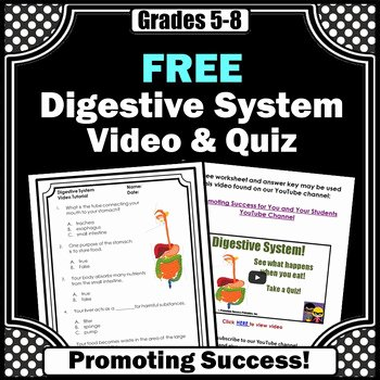Digestive System Worksheet Answers Luxury Free Digestive System Activities