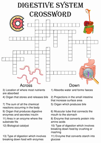 Digestive System Worksheet Answers Unique Biology Crossword Puzzle the Digestive System Includes