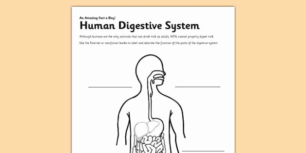 Digestive System Worksheet High School Beautiful Human Digestive System Worksheet Worksheet Digestion