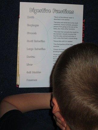 Digestive System Worksheet High School Best Of Digestive System Worksheets 100 Page Packet Homeschool Den