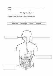 Digestive System Worksheet High School Best Of Digestive System Worksheets