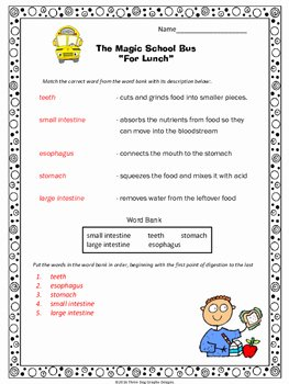 "Digestive System Worksheet High School Elegant Digestion Magic School Bus ""for Lunch"" Video Response"