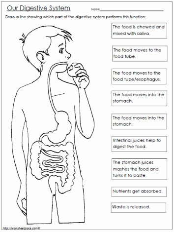 Digestive System Worksheet High School Inspirational Free Digestive System Worksheet