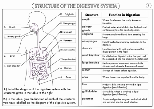 Digestive System Worksheet High School Unique Gcse Digestion topic Resource Pack Updated