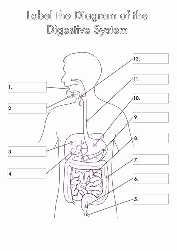 Digestive System Worksheet Pdf Elegant Four Human Biology Diagrams to Label Heart Lungs