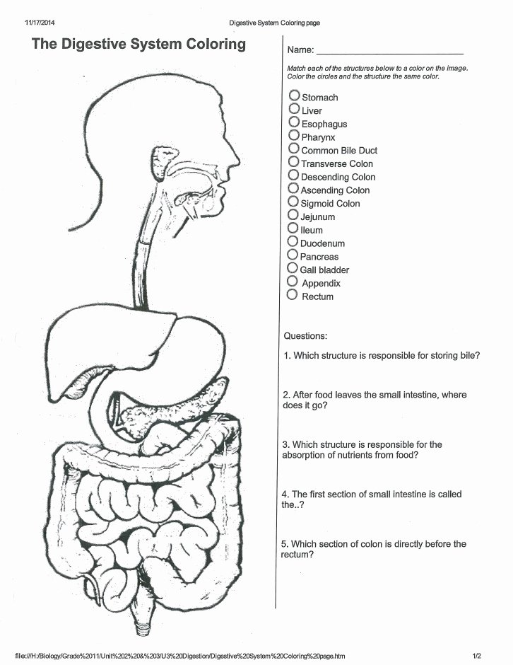Digestive System Worksheet Pdf Luxury How to Lose Weight Fast Digestion and Nutrition Worksheet