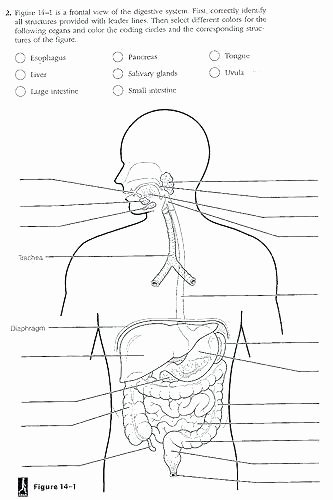 Digestive System Worksheet Pdf Unique Circulatory System Labeling Worksheets – Morningknits